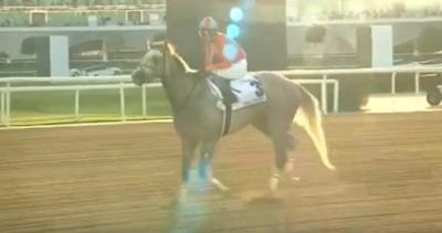 松永幹夫調教師「米国馬はケンタッキーダービーが大目標。ラニはケンタッキーダービーが叩き台。チャンスある」