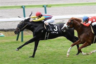 に本ダービー5着馬・コメートが競走馬登録を抹消…サンシャイン牧場で種牡馬に