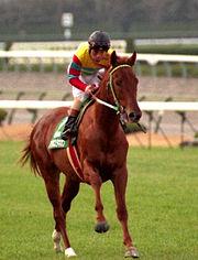 アグネスタキオンって馬が凄かったらしいな。どんなもんか教えてくれ。
