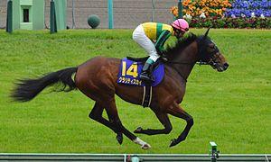 G1馬クラリティスカイが引退、JRAで乗馬に