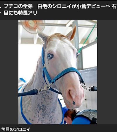 ブチコの全弟、白毛のシロニイが小倉デビューへ!