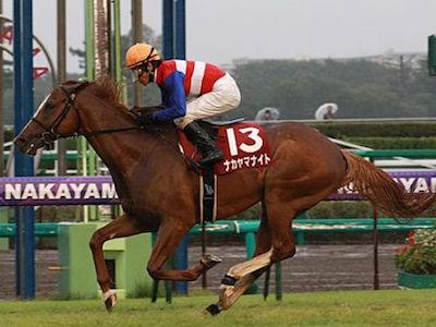 ナカヤマナイトが引退…今後は乗馬となる予定