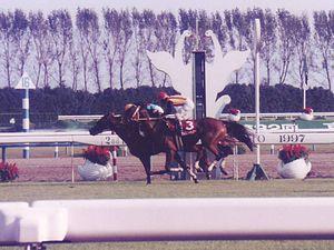 1995年のオークス馬、ダンスパートナー死亡