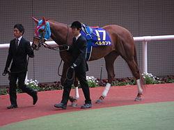 ベルカントが引退…繁殖牝馬となり初年度はキズナと配合の予定