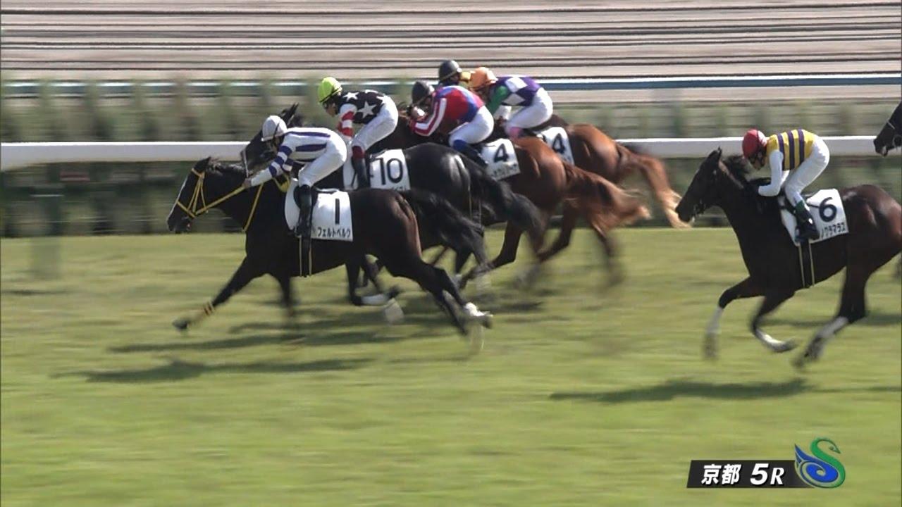 G17勝牝馬ジェンティルドンナの全妹ベルダム、新馬戦17着…