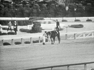 騎手と競走馬