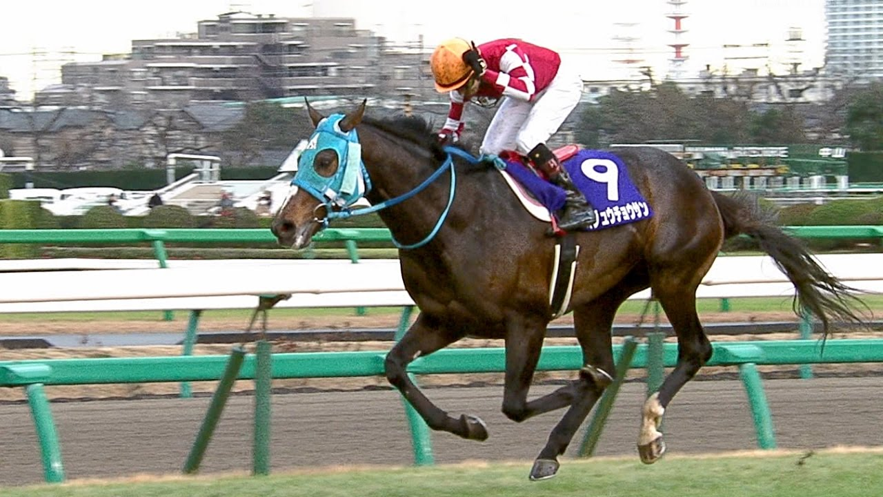 ハルウララが連敗記録持ってるけど連勝記録はどの馬が持ってるの?