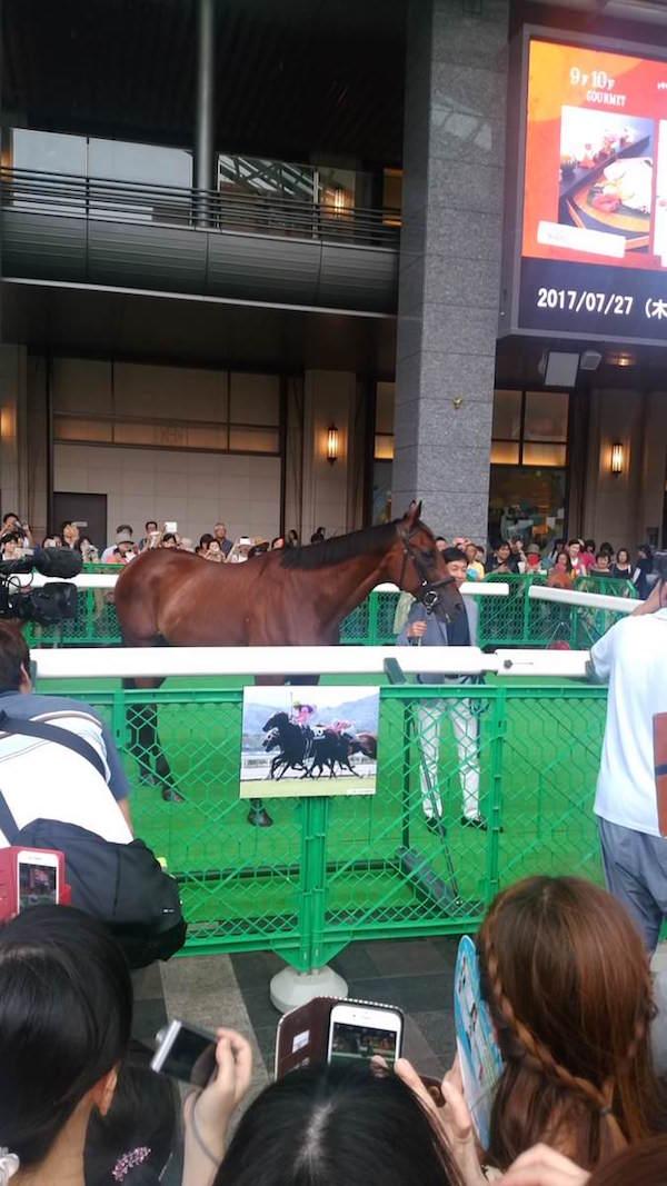 メイショウカイドウ君、今開催で誘導馬引退…最後の博多巡業にやって来たお