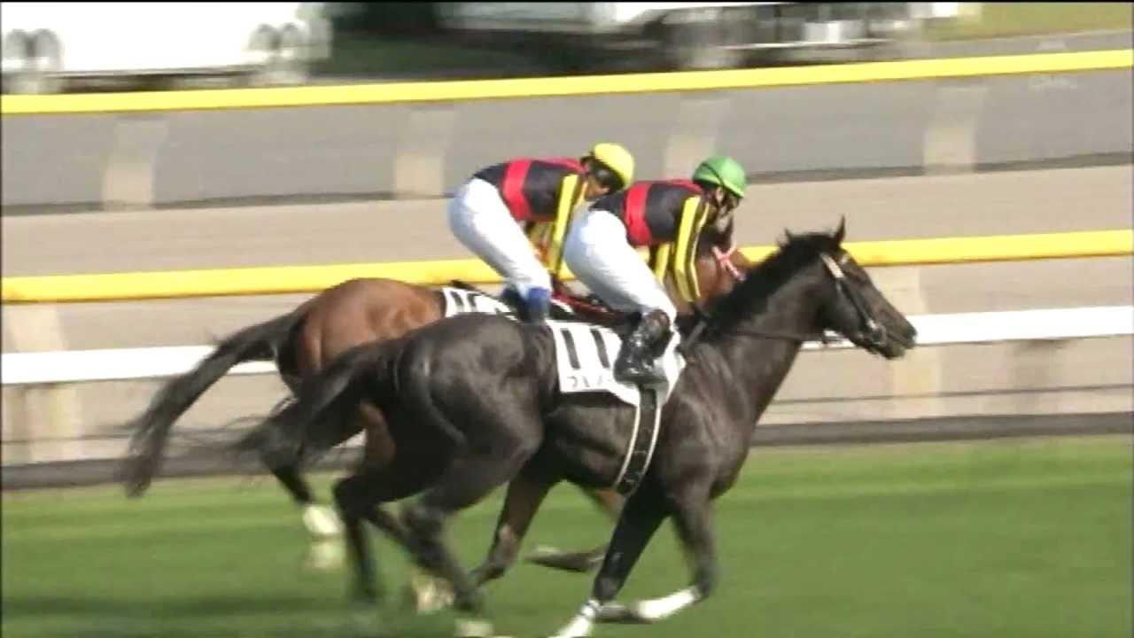 凱旋門賞で見たかった馬ベスト3 テイエムオペラオー、メジロマックイーン、あと1頭は?