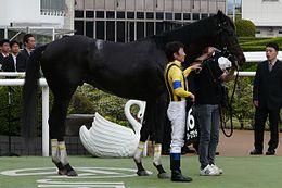 グレープブランデーが引退…今後は北海道の社台ファームで乗馬となる予定