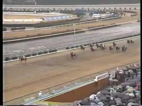 雨で思い浮かぶ競走馬