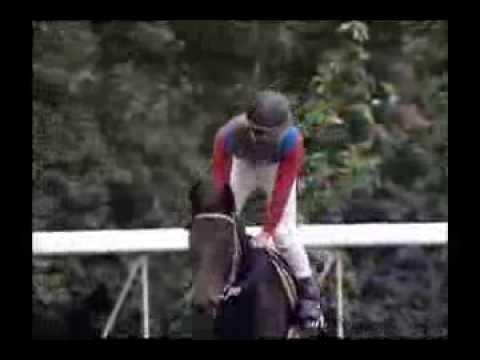 日本競馬史上「最も活躍した馬」は?