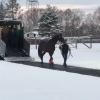 雪にびびって馬運車から降りるのを拒否するキタサンブラックがかわいすぎるwwwww