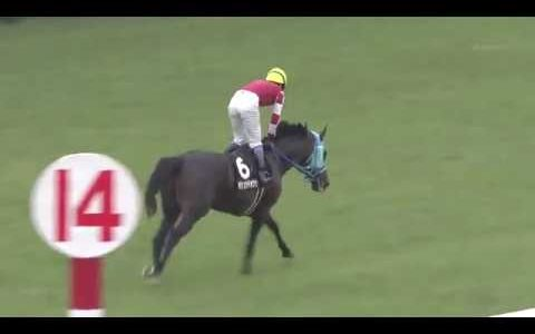 オジュウチョウサン、10月6日六社S(3勝クラス)からステイヤーズへ  鞍上は石神深一騎手