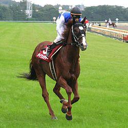 ダイワメジャー以降、天皇賞秋勝った馬で種牡馬成功してるのがいない件