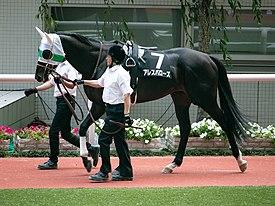 アレスバローズが引退…今後は北海道新冠町の優駿スタリオンステーションで種牡馬となる予定