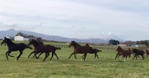 メジロドーベルさん(25歳)が当歳馬に混じって元気に走り回っててワロタw