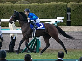 ウーマンズハートは阪神チューリップ賞で始動…鞍上は藤岡康太騎手