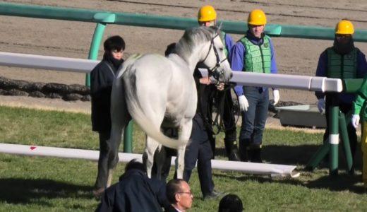 落馬した三浦皇成騎手は左肩関節骨折の疑い、左橈骨(とうこつ)遠位端骨折の疑い、大塚海渡騎手は頭部外傷、脳挫傷の疑い