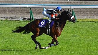 京都記念2着カレンブーケドール、次走鞍上O.マーフィー騎手でドバイシーマクラシックへ