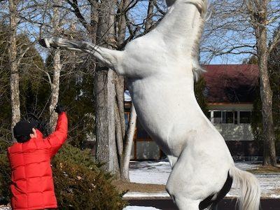 ゴールドシップさん今年の種牡馬展示会でも直立不動を披露wwwwww