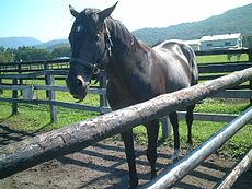 三冠馬ナリタブライアンの全弟ビワタケヒデが死亡……25歳