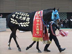 オジュウチョウサンが目指すべきレースは有馬ではなくグランドナショナルだよな