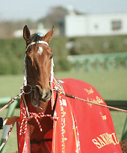 スタミナがある馬はスタミナがあった種牡馬からしか出ないのか?