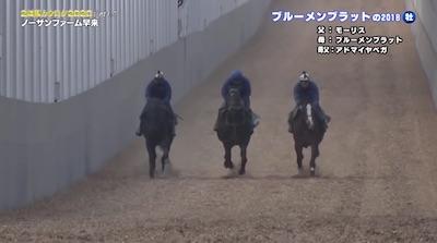モーリス産駒最高傑作ブルメンダールついに始動!!!