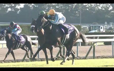 デアリングタクト、QE2世カップの招待受諾……鞍上は松山弘平騎手