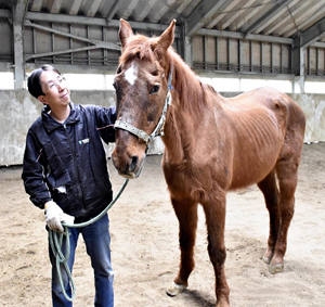 乗馬クラブで30年間活躍した36歳馬が大往生 職員「ここまで生きたのは奇跡に近い」