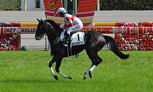 ダノンプレミアムが引退……今後は種牡馬となる予定……繁養先は未定